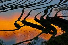 Rijstterrassen van yuanyang Stock Foto