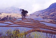 Rijstterrassen van yuanyang Royalty-vrije Stock Afbeeldingen