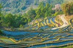 Rijstterrassen van Yuanyang, Yunnan, China Stock Foto