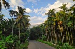 Rijweg tussen Kokospalmen royalty-vrije stock fotografie