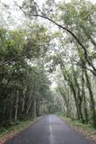 Rijwegen in het bos Royalty-vrije Stock Foto's