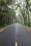 Rijwegen in het bos Royalty-vrije Stock Foto