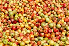 Rik äppleskörd - äpplebakgrund arkivfoto