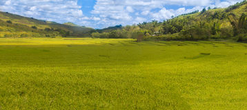 Rik kulör ricefield Fotografering för Bildbyråer