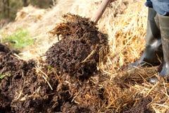 Rik organisk komposttäckning från gödsel och sugrör Arkivfoton