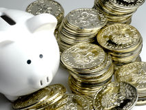 Rik Piggy grupp med guldmyntpengar, penna Royaltyfri Fotografi