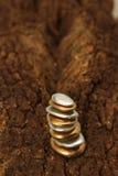 Guld- Pebblecontemplkation av rikedomen Royaltyfri Bild