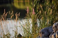 Rikedom av vegetation på sjön Royaltyfri Bild