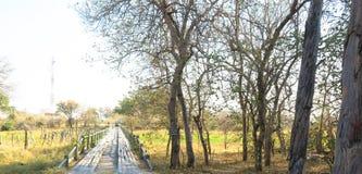 Ricketty old wooden bridge at Khwai River, Okavango Delta, Botswana. Riketty old wooden bridge at Khwai River, Okavango Delta stock photos