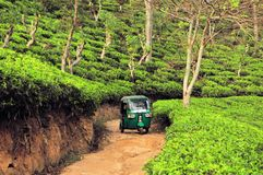 Rikshaw w herbaty pola plantacjach, Sri Lanka Obrazy Royalty Free