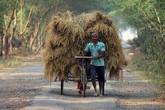 Riksza jeździec odtransportowywa ryż od uprawia ziemię do domu Obrazy Stock