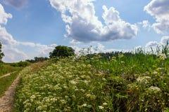 Rikt blommande sommaräng fotografering för bildbyråer