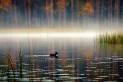 Rikt område av färger av höstskogen på kust av den tysta dimmiga sjön royaltyfri bild