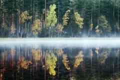 Rikt område av färger av höstskogen på kust av den tysta dimmiga sjön arkivbilder