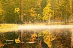 Rikt område av färger av höstskogen på kust av den tysta dimmiga sjön royaltyfri foto
