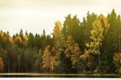 Rikt område av färger av höstskogen på kust av den tysta dimmiga sjön royaltyfria bilder