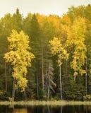 Rikt område av färger av höstskogen på kust av den tysta dimmiga sjön royaltyfri fotografi