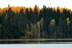 Rikt område av färger av höstskogen på kust av den tysta dimmiga sjön arkivfoton
