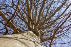 Rikt träd royaltyfria bilder