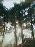 Riktade solstrålar till och med trän arkivbild
