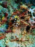 Riktig havskula Arkivbilder