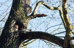 Riktig livsmiljö för uggla` s under dag Arkivfoto