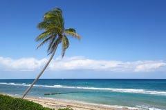 Riktigt Palm Beach Royaltyfria Foton