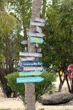 riktningspalmträd Arkivbild