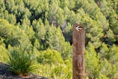 Riktningstecken på en pol i skogen Fotografering för Bildbyråer