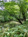 Rikugien Garden, Tokyo, Japan royalty free stock photos