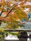 Rikugien-Garten Berühmter Platz, zum von Herbstfarben in Tokyo, Japan aufzupassen Stockbild