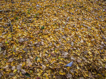 Rikugien-Garten Berühmter Platz, zum von Herbstfarben in Tokyo, Japan aufzupassen Stockfoto