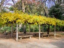 Rikugien trädgård Berömt ställe som håller ögonen på höstfärger i Tokyo, Japan arkivbilder