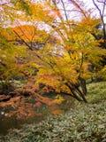 Rikugien trädgård Berömt ställe som håller ögonen på höstfärger i Tokyo, Japan royaltyfri foto