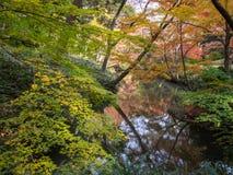 Rikugien trädgård Berömt ställe som håller ögonen på höstfärger i Tokyo, Japan royaltyfria bilder