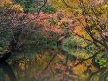 Rikugien trädgård Berömt ställe som håller ögonen på höstfärger i Tokyo, Japan arkivbild