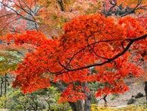 Rikugien trädgård Berömt ställe som håller ögonen på höstfärger i Tokyo, Japan arkivfoton