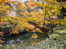 Rikugien trädgård Berömt ställe som håller ögonen på höstfärger i Tokyo, Japan royaltyfria foton