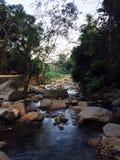 Ril natuurlijk in wildernis Thailand Stock Foto's