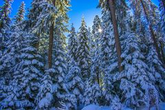 Rila-Berg im Winter lizenzfreies stockbild