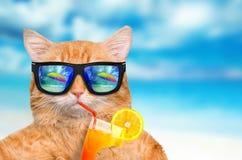 Rilassamento d'uso degli occhiali da sole del gatto Fotografia Stock Libera da Diritti