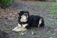 Rilassamento del cane Fotografia Stock