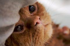 Rilassamento del gatto Fotografie Stock