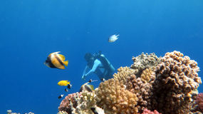 Rilassamento del subaqueo Fotografia Stock Libera da Diritti