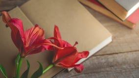 Rilassamento di mattina e accogliente con rosso di fioritura lilly su oro scuro Fotografie Stock