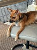 Rilassamento pigro del cane Fotografia Stock