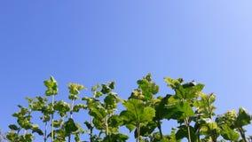 Rilassandosi con le foglie verdi con cielo blu Immagini Stock Libere da Diritti