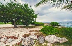 Rilassandosi sulla spiaggia tropicale a distanza di paradiso dentro Fotografie Stock