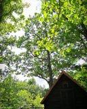 Rilassi e pace nel legno fotografia stock