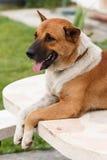 Rilassi il cane Immagini Stock Libere da Diritti